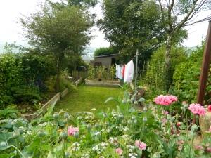 garden sept. 2014 (17)