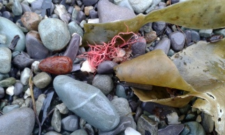 Lisheen beach pebbles