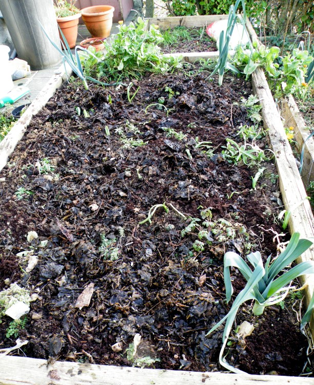 Experimental bed set with seeds 1/2/15