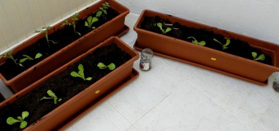 start of container garden