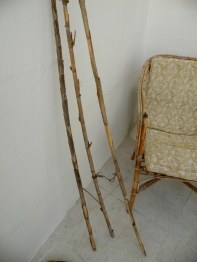 bamboo sticks found on roadside