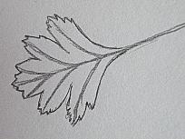 DSCF2042